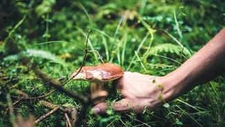 В Воронеже ещё один человек отравился грибами