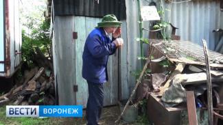 Жители Воронежской области просят объявить ЧС из-за нашествия комаров