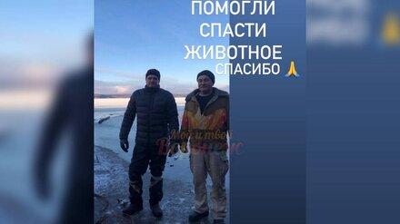 В Воронеже двое мужчин спасли провалившуюся под лёд собаку