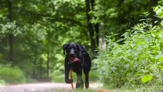 Полиция разберётся в истории с укусившей 11-летнюю девочку собакой в Воронеже