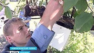 Инспекторы Россельхознадзора в садах и на полях собирают урожай бабочек