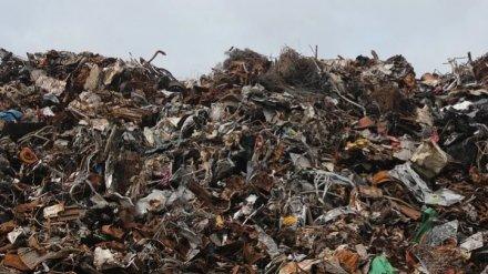 В Воронеже во время режима самоизоляции усилят уборку мусорных площадок