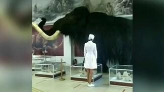 Воронежский музей снял абсурдный ролик про вакцинацию с мамонтом Степаном
