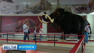 Музей в Костёнках может получить статус федерального