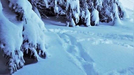 В Воронежской области ушедший за ёлкой пенсионер 19 часов провёл в лесу на морозе