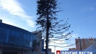 ВИДЕО: Лысая ёлка шокировала жителей Копейска