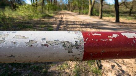 В воронежских лесах установят шлагбаумы для предупреждения пожаров