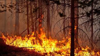 Александр Гусев поручил усилить профилактику лесных пожаров в Воронежской области