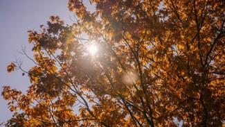 Воронежцам пообещали солнечные выходные с температурой до +16