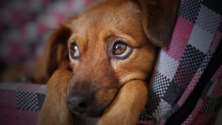 Воронежец выбросил щенка с 5 этажа на глазах у детей