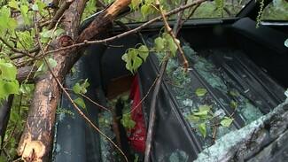 В Воронеже упавшие из-за сильного ветра деревья разбили два автомобиля