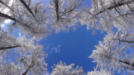 Воронежские синоптики рассказали, будет ли солнечным начало новой недели