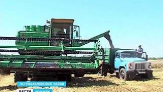 На юге Воронежской области собирают урожай - пока не такой, какого ожидали