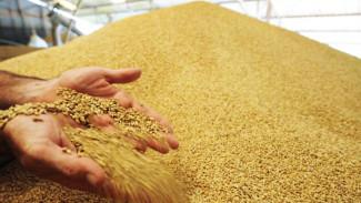 Россельхознадзор ужесточил требования к качеству зерна на воронежских элеваторах