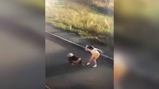 Под Воронежем большая собака разорвала маленького пса на глазах у детей: появилось видео