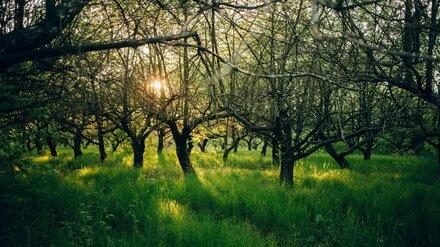 Воронежцы выйдут на субботник в яблоневый сад