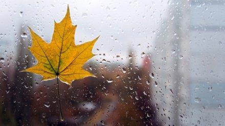 Синоптики рассказали, останутся ли дожди на выходных в Воронежской области