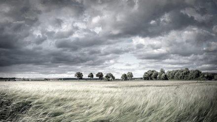 Пропавшего в Воронежской области водителя с провалами в памяти нашли мёртвым в поле