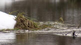 Дожди и оттепель помогли уменьшить загрязнение в «мёртвой» Усманке под Воронежем