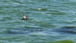 В Воронежской области с начала купального сезона утонуло 30 человек