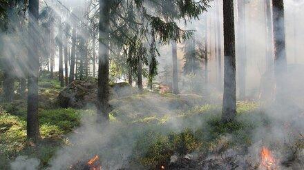 Во всех районах Воронежской области установился 3 класс пожарной опасности