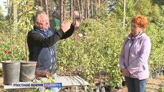 Воронежцам рассказали, как правильно сажать осенью плодовые деревья