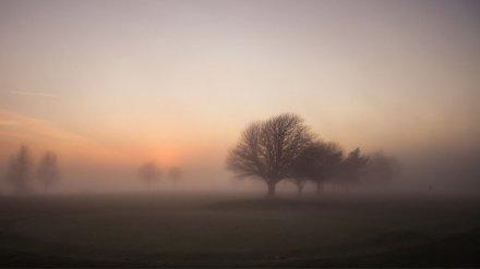 Метеорологи рассказали, сколько в Воронежской области продержится туман