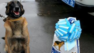 В Воронеже наградили овчарку Зорро за раскрытие вооружённого нападения на почтальона