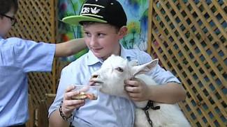 В День рождения Воронежского зоопарка можно было покормить животных