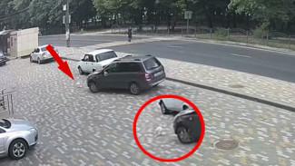 В Воронеже полиция ищет водителя, задавившего на парковке кота
