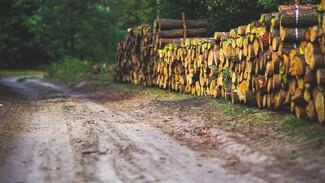 Директора воронежской «Лесной охраны» поймали на взятке