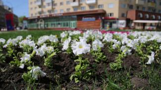 В Воронеже к началу лета разобьют 230 цветников