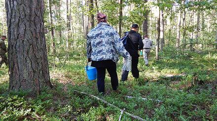 В Воронежском заповеднике поймали черничных браконьеров
