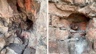 Воронежцам показали фото найденных в стене жилого дома снарядов времён войны