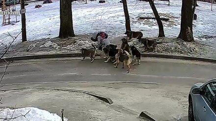За нападение 8 собак на воронежскую школьницу пожурили сотрудника управы