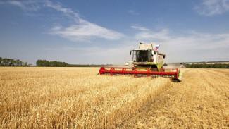 Воронежские аграрии решили, что будут делать в условиях кризиса