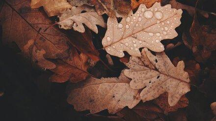 Главный метеоролог Воронежской области дал прогноз на первый месяц осени
