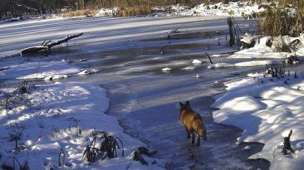 Хопёрский заповедник откроет для воронежцев новый экскурсионный маршрут