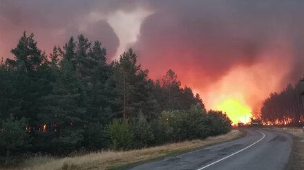 Причиной пожара площадью 150 га в Воронежской области могла стать искра с опоры ЛЭП