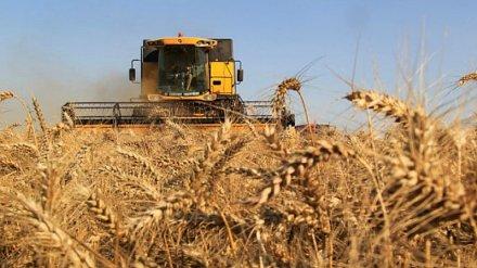 Воронежские аграрии собрали третий миллион тонн зерна