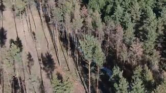 Стрельба в Северном лесу Воронежа привела к уголовному делу