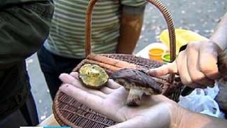 """Призы, за собранные грибы, можно было получить на базе отдыха """"Усманка"""""""