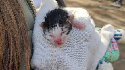 Воронежские студентки спасли выброшенных в пакете новорожденных котят