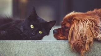 Кошки опаснее собак. Воронежский эксперт рассказала о борьбе с аллергией на животных