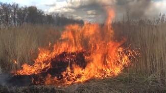 Неизвестные подожгли камыш между двумя воронежскими сёлами: появилось видео