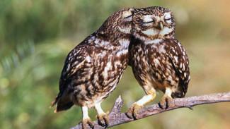 Воронежский зоопарк запускает онлайн-конкурс в честь Дня всех влюблённых