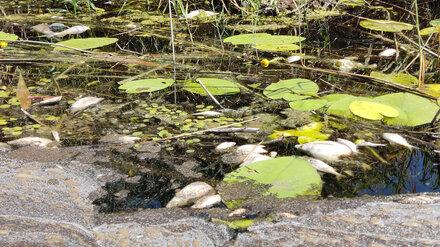 Эксперты рассказали о первых пробах воды из воронежской реки после массовой гибели рыбы