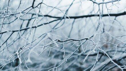 Метеорологи пообещали морозные выходныев Воронежской области