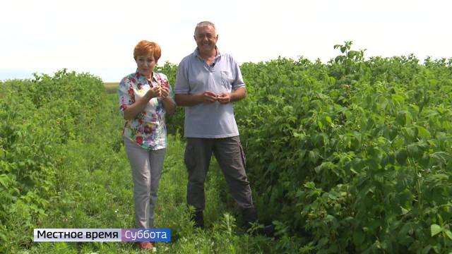 Воронежский фермер рассказал, как собрать двойной урожай малины