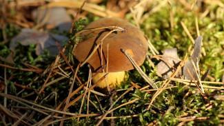 В Воронежской области в лесу заблудились собиравшие грибы пенсионерки